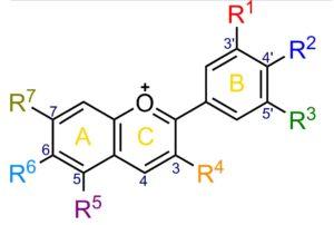アントシアニン=糖+アントシアニジンの一般形