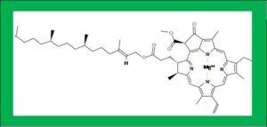 葉っぱの色素(緑)構造式クロロフィルa