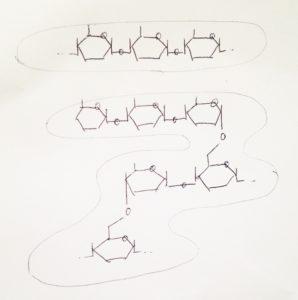 デンプン(アミロースとアミロペクチン)のモデル