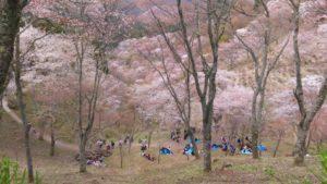 吉野山,花見